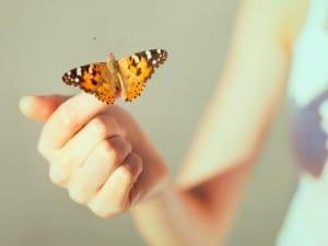 butterfly meanings
