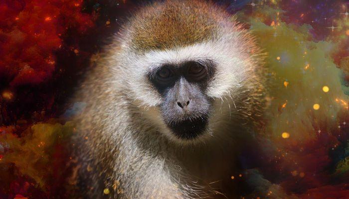 monkey 2016 cny