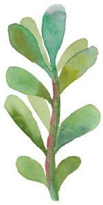 succulent gratitude 2