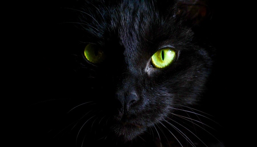 Black witches cat bright green eyes good luck bad luck