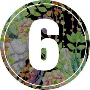 6-numerology