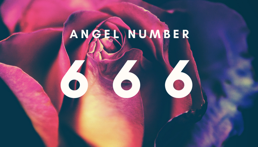Angel Number 666 on a Rose