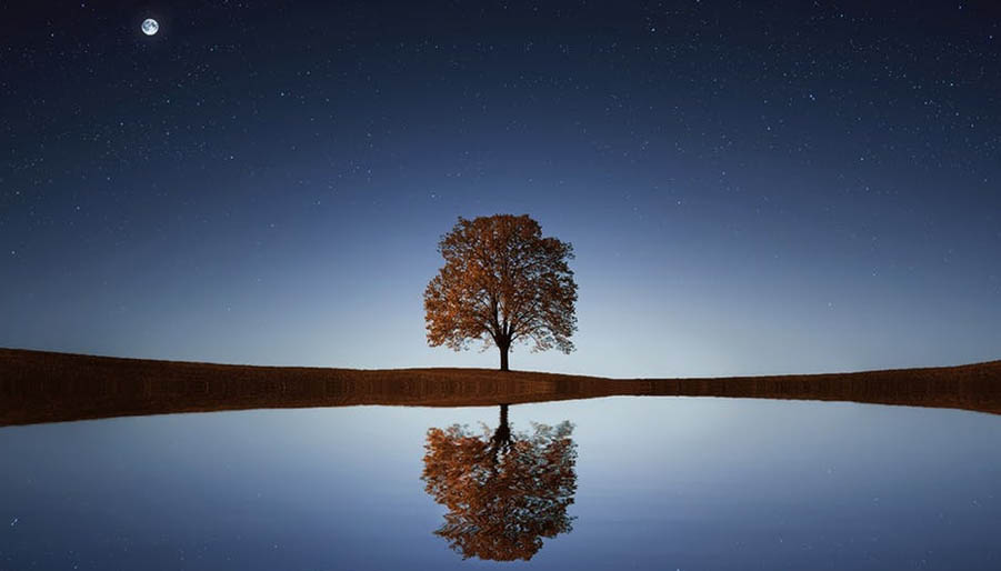 tree on lake with reflection